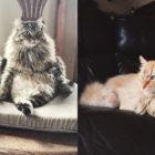 Lola and Cheeto