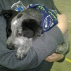 Baby Bruin! Puppy Bowl VII alumni